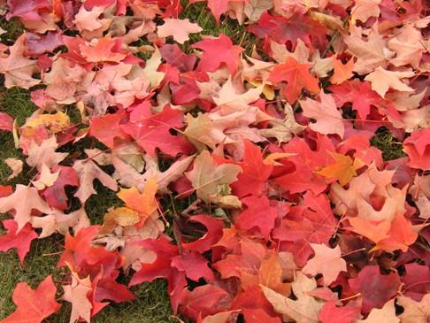 紅葉落ち葉3.jpg
